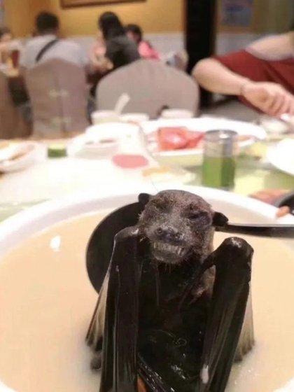 En diversos países asiáticos, la sopa de murciélago es considerada un remedio para diferentes males (Foto: Twitter@angeant)