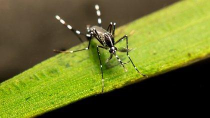 La lavandina mezclada con agua puede servir para ahuyentar mosquitos, pero aplicada sobre recipientes sirve para prevenir criaderos de criaderos de Aedes aegypti (Shutterstock)