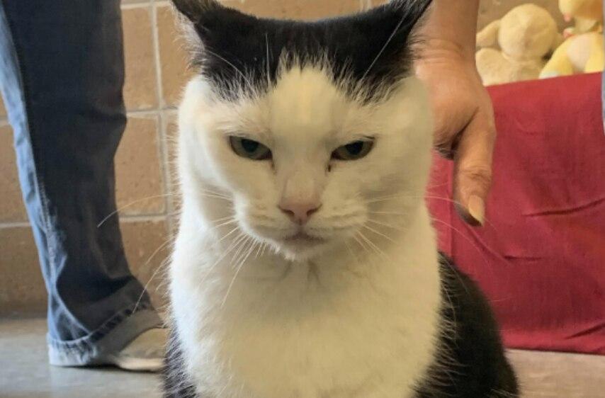La gata perdió a su dueño en Nochebuena (Foto: Mitchell County Animal Rescue)
