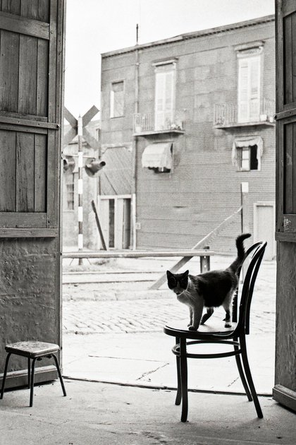 Gato, Carpintería en La Boca, Buenos Aires, 1958