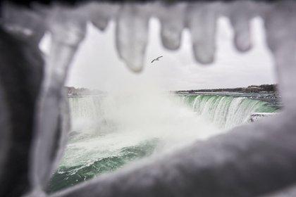 Una gaviota vuela sobre las cataratas Horseshoe Falls en Niagara Falls, Ontario, el 27 de enero de 2021. AFP