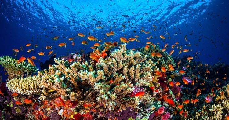 Ahora o nunca: cuando el turismo se convierte en enemigo de las maravillas naturales
