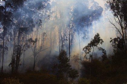 En los últimos tres años los incendios forestales en Ecuador, que se suelen presentar en la época seca de julio a septiembre, causaron la pérdida de 61.665 hectáreas (EFE)
