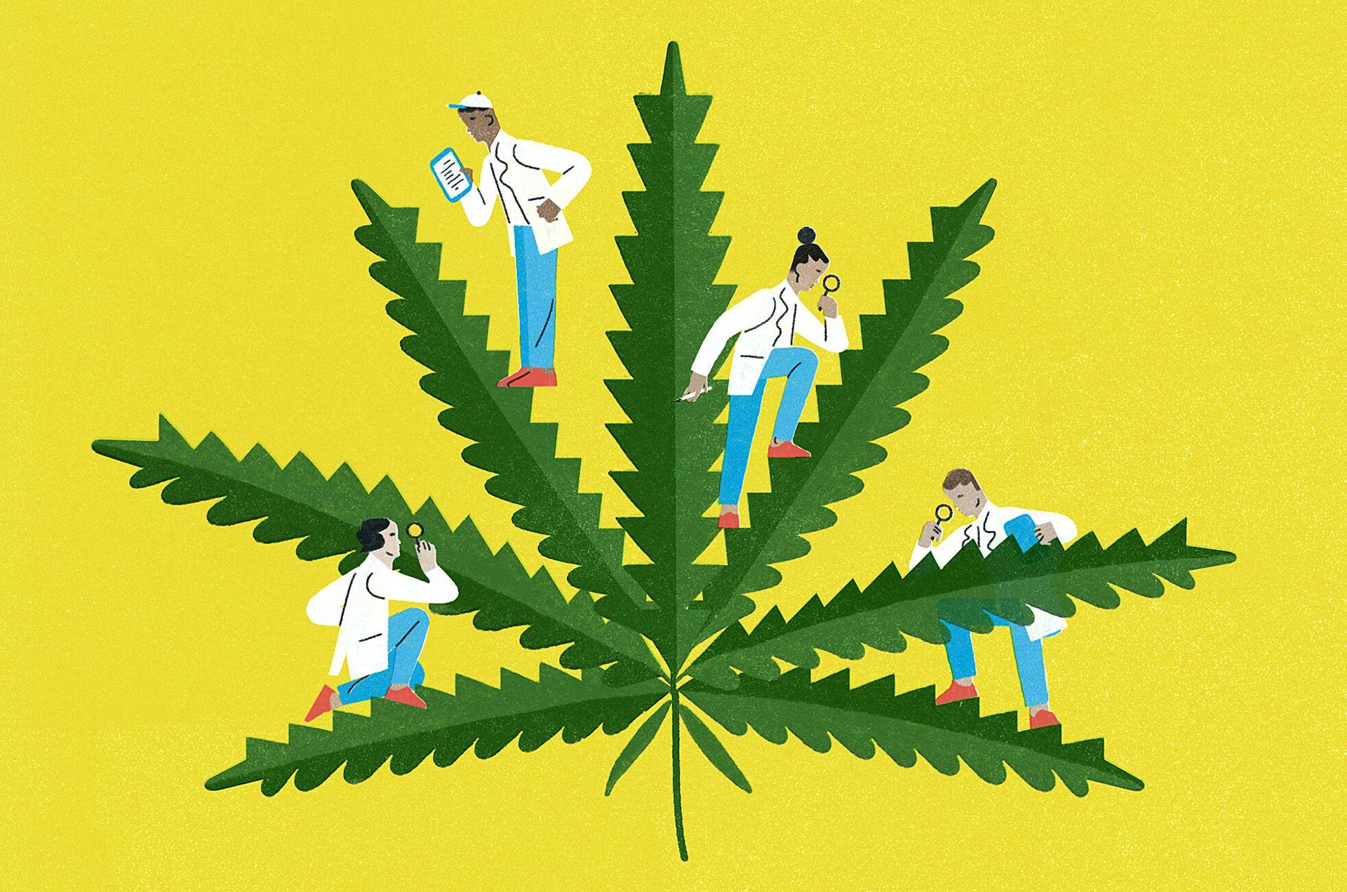 Marihuana NYT
