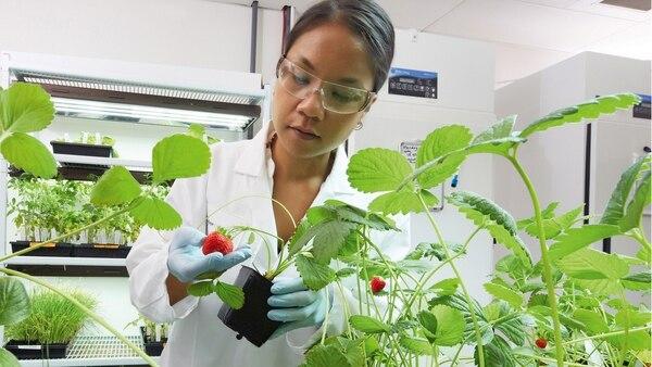 Los avances biotecnológicos y la agricultura digital son algunas de las claves para el desarrollo del campo argentino según Bayer.