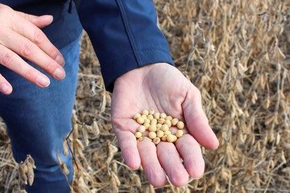Imagen de archivo de la agricultora Pat Swanson examinando la calidad de su soja en Ottumwa, Iowa, EEUU. 4 octubre 2019. REUTERS/Kia Johnson