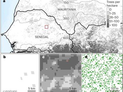 Mapeo de árboles a gran escala. La información precisa sobre la distribución de los árboles proporciona conocimientos ecológicos útiles (Nature)