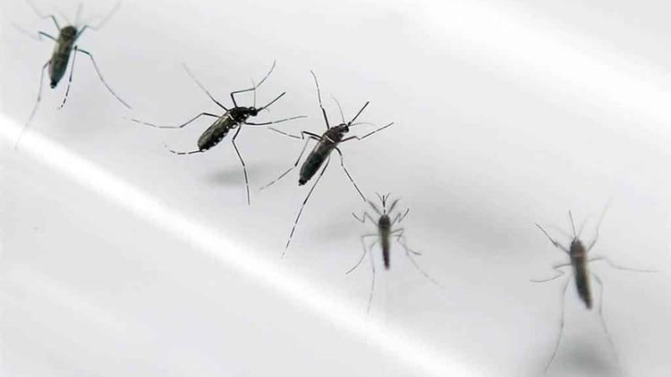 Muchos de los mosquitos son los responsables de terribles enfermedades (Shutterstock)