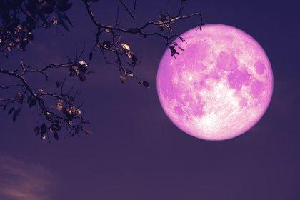En algunas partes de América del Sur, Europa, África y Oceanía se podrá vislumbrar la Luna de Fresa (Foto representativa -Shutterstock)