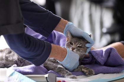 Imagen de archivo de una veterinaria examinando a una gata en medio de protocolos de seguridad por el coronavirus (REUTERS/Caitlin Ochs)