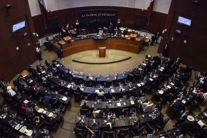 En el Senado de la república se debatirá la legalización de la marihuana  (Foto: Mario Jasso/ Cuartoscuro)