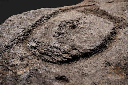 Sus inscripciones dan cuenta de los primeros asentamientos humanos en Europa durante la Edad de Bronce. (D. Gliksman / Inrap)