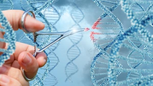 Las tijeras moleculares permiten editar genes en animales e insectos (iStock)