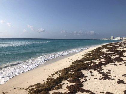 Además de la pandemia, el sargazo también comienza a ser un problema para Quintana Roo. (Foto: Foto: Instagram@clavisfishing)