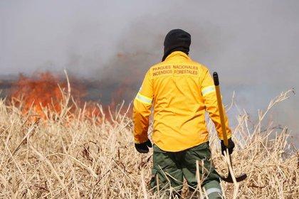 Cada vez son más los focos de incendio en los humedales del Delta del Río Paraná