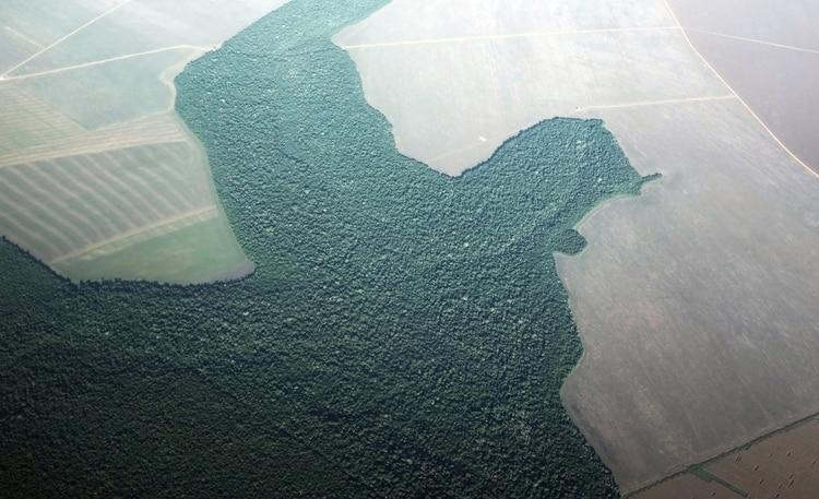 La Amazonia transformada en campo en Alta Floresta, en el estado de Pará(REUTERS/Nacho Doce/archivo)