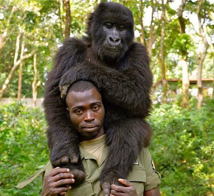un guardabosques posa junto a una cría de gorila (Foto: Facebook @The Elite AntiPoaching Units And Combat Trackers)