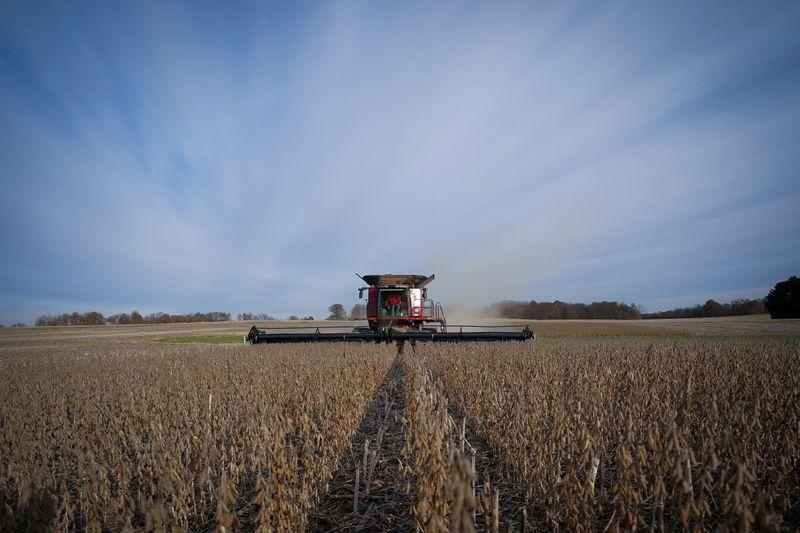 El documento destacó el aporte de la cadena agroindustrial a la economía. REUTERS/Bryan Woolston/Archivo
