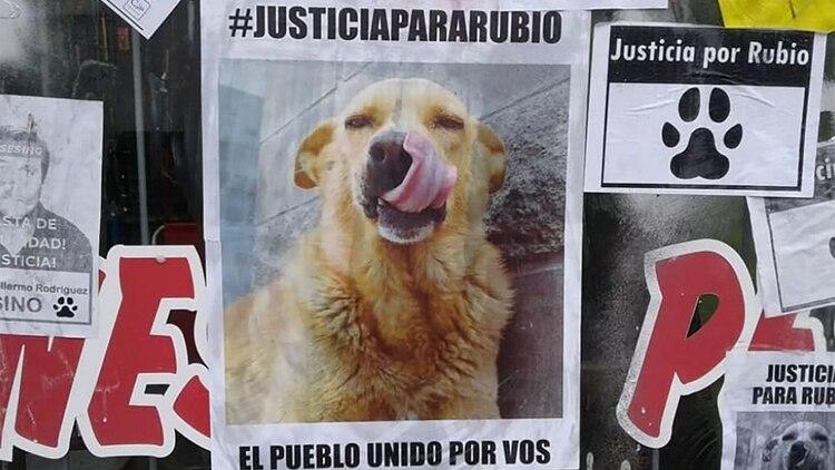 Convocan a una movilización en distintos puntos del país para pedir justicia por el perrito muerto (Infocielo)
