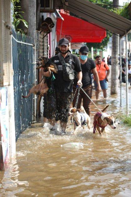 VILLAHERMOSA, TABASCO, 09NOVIEMBRE2020.- Algunos pobladores pusideron a salvo a sus mascotas, sin embargo muchos perros callejeros quedaron un situación vulnerable debido a las inundaciones y cocodrilos en el área  FOTO: CARLOS CANABAL OBRADOR/CUARTOSCURO