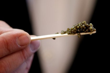 La creciente demanda de caviar elevó su precio a niveles inusitados y provocó que el esturión se convierta en una especie en peligro de extinción (REUTERS/Charles Platiau/File Photo)