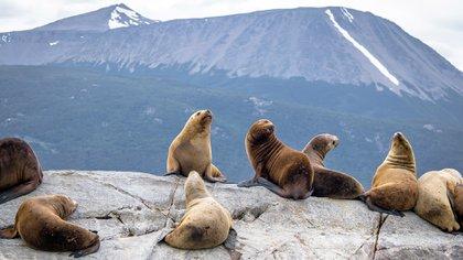 El estrecho Canal Beagle, que separa la cadena de islas de Tierra del Fuego al norte de las remotas islas chilenas al sur, sirve como un canal para la ciudad más austral del mundo, Ushuaia (Shutterstock)