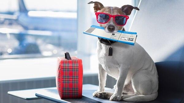 """Si el perro viaja en """"transportín"""" es importante que viaje con """"olores"""" o juguetes que reconozca. (Getty)"""