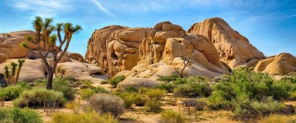 Un estudio reveló que los parques nacionales de Estados Unidos ya son víctimas del cambio climático