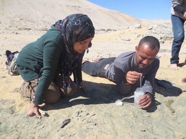 La estudiante Mai El-Amir (izquierda) y el profesor Hesham Sallam de la Universidad de Mansoura analizan restos del dinosaurio Mansourasaurus shahinae encontrado en la región (Sanaa El-Sayed / Mansoura University / The Washington Post)