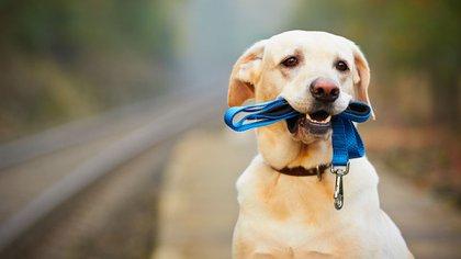 Perros cuarentena