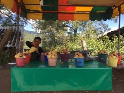 Un niño vendía duraznos para ayudar a la economía familiar, un cultivo local en los municipios de la Sierra guerrerense. Credit Vania Pigeonutt