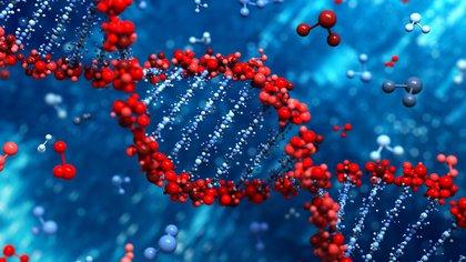El gen ACE2, que es la puerta de entrada al cuerpo, tiene una sensibilidad por los pulmones (Shutterstock)