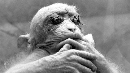 ¿En el nombre de la ciencia? ¿Cuál es el limite para torturar animales en experimentaciones?
