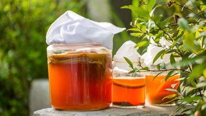 El uso de probióticos que generan un efecto antiinflamatorio y antioxidante (Shutterstock)