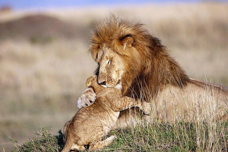 ¿Simba y Mufasa existen? La foto que enternece al mundo