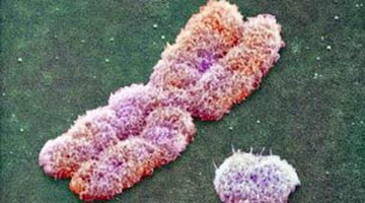 Los cromosomas sexuales, X e Y, tenían el mismo tamaño y la misma cantidad de genes hace 166 millones de años.