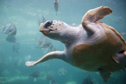 14/09/2020 Bacterias pueden aportar el sexto sentido magnético de algunos animales.  El sexto sentido magnético de algunos animales, como la capacidad de las tortugas marinas para regresar a la playa donde nacieron, puede provenir de una simbiosis con especies de bacterias.  POLITICA INVESTIGACIÓN Y TECNOLOGÍA UKANDA / FLICKR