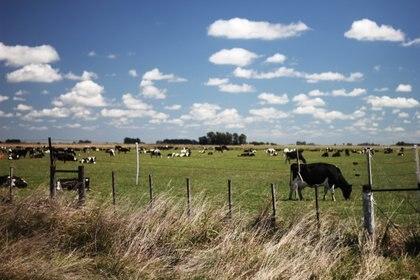 Los campos de la Pampa argentina, una postal típica de este país