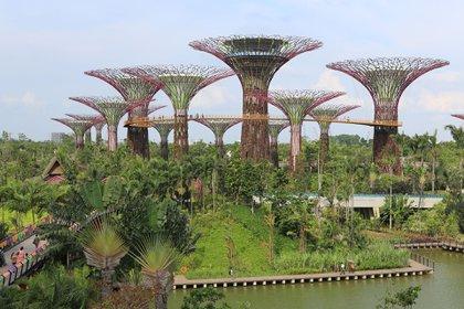"""El parque forma parte de las políticas de Gobierno por hacer de Singapur una """"ciudad dentro de un jardín"""" con el objetivo inicial de """"mejorar la calidad de vida junto a la flora y fauna"""" de la ciudad"""
