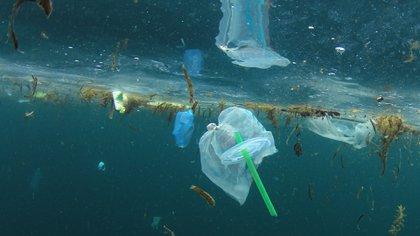 La contaminación plástica en mares y océanos es también a causa de los sorbetes (Shutterstock)