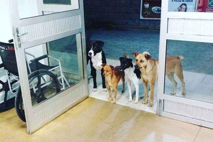 Cuatro perros esperan ansiosos a que su dueño sea atendido en urgencias (Foto: @CrisMamprim)