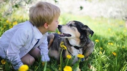 Tener una mascota tiene muchos beneficios para los niños y el entorno familiar