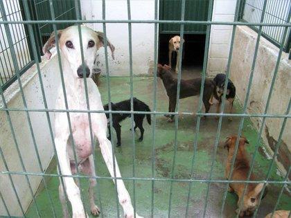 La iniciativa contra el maltrato animal #YoSíPuedoContarlo llena la red de redes con fotos de mascotas rescatadas de las calles