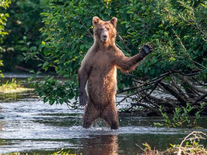Eric Fisher/ Comedy Wildlife Photography Awards