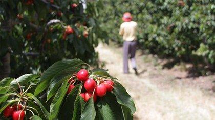 Desde el Gobierno esperan que haya una mejora competitiva (Prensa Agroindustria)