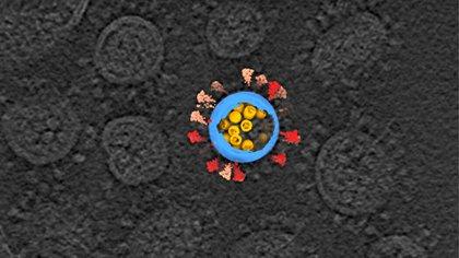 image du SRAS-CoV-2 sur une tomographie par cryo-électrons - Sai Li, École des sciences de la vie de l'Université Tsinghua