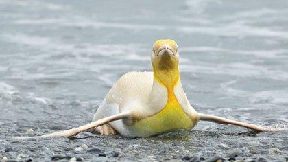 Pingüino. (yves_adams)
