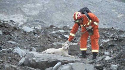 Un perro inmovilizado entre los escombros espera noticias de su amo tras el trágico incidente meteorológico en China