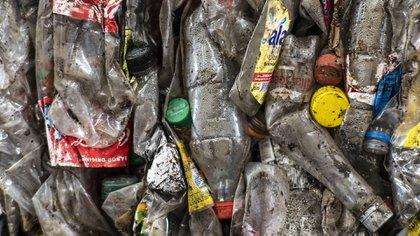 El sistema de recolección de desechos reciclables se configuró con 442 grandes generadores (Lihue Althabe)