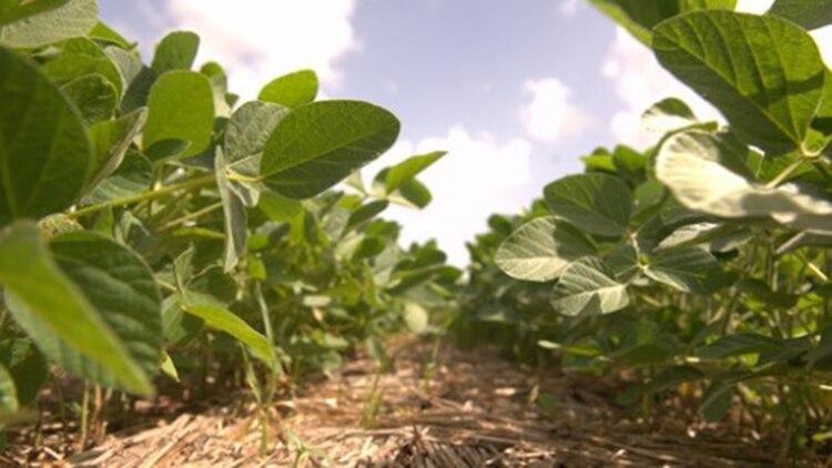 """EEUU sigue diciendo que los precios del poroto de soja en Argentina, """"aún se mantienen por debajo de los precios del mercado internacional"""""""